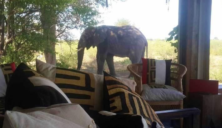 Elephant outside suite window