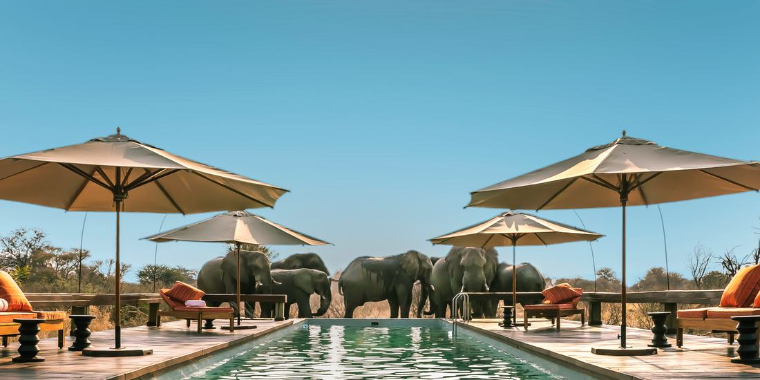Elephants drinking from the lodge pool