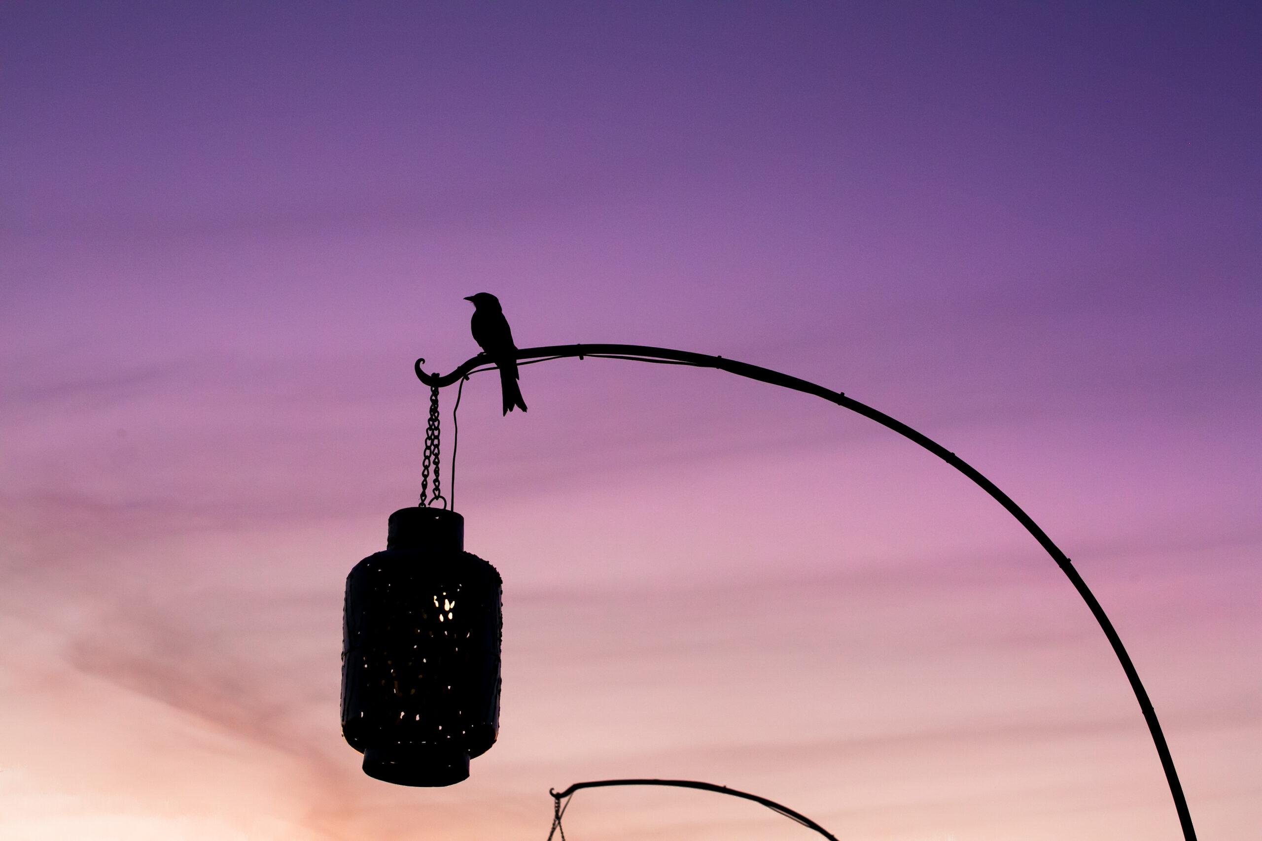 Bird Botswana